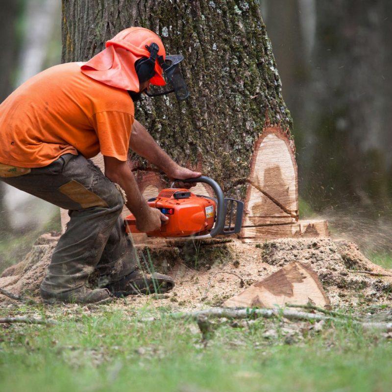 abattage arbre LA-BAULE-GUERANDE-PORNICHET