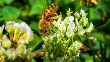 pollinisation La Baule Guérande